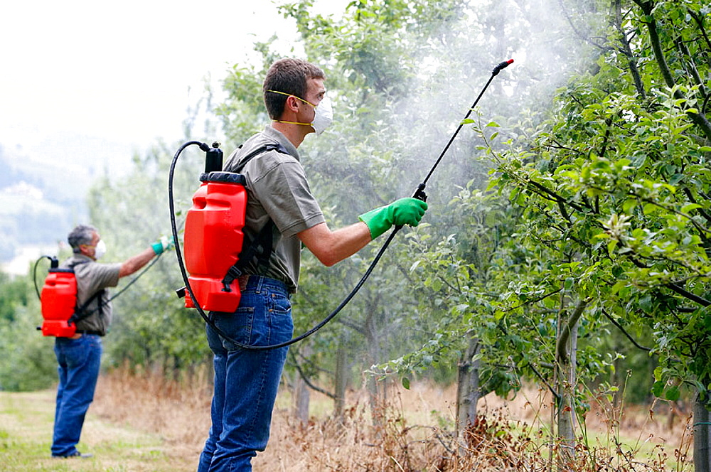 Farmers treating fruit trees with sprayer (Insecticides, Pesticides), Apple trees, Gipuzkoa, Euskadi, Spain.