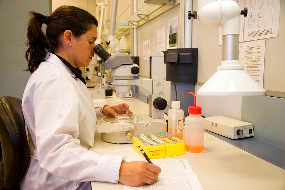 Water samples, Plankton laboratory, AZTI-Tecnalia, Technological Centre specialised in Marine and Food Research, Pasaia, Gipuzkoa, Euskadi, Spain. - 817-67361