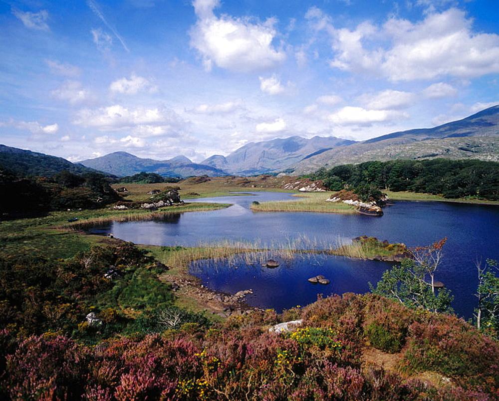Killarney National Park, Co, Kerry, Ireland.
