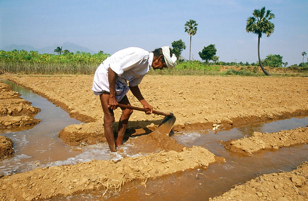 70-year-old Tangaya irrigating his land, Tamil Nadu, India.