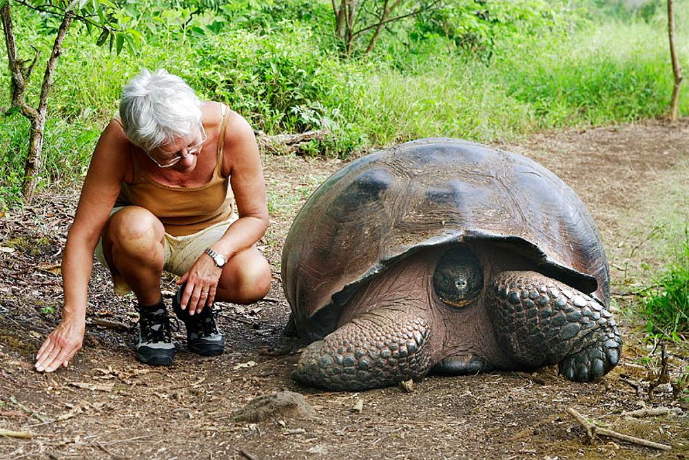 Galapagos Giant Tortoise (Geochelone elephantopus)