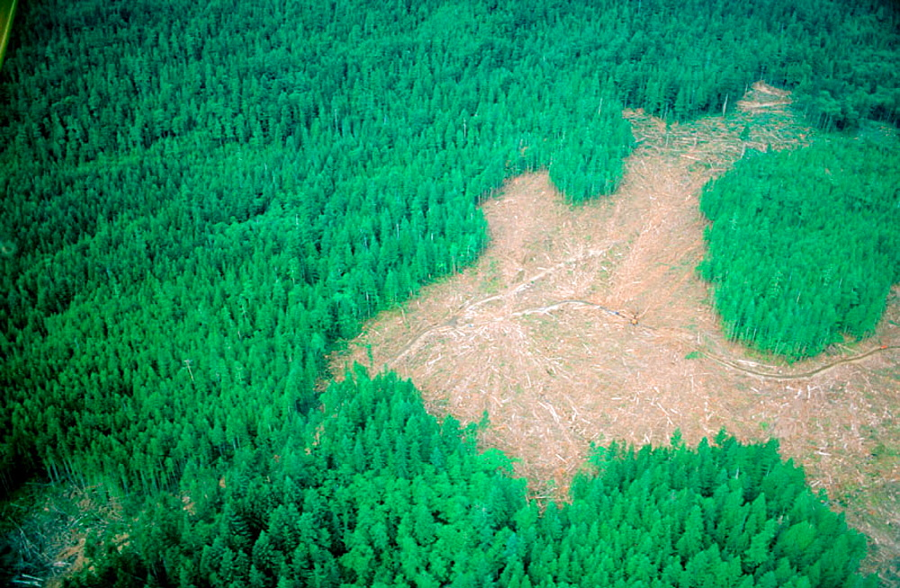 Aerial view of patch logging operations in British Columbia's Coast Mountains, Canada