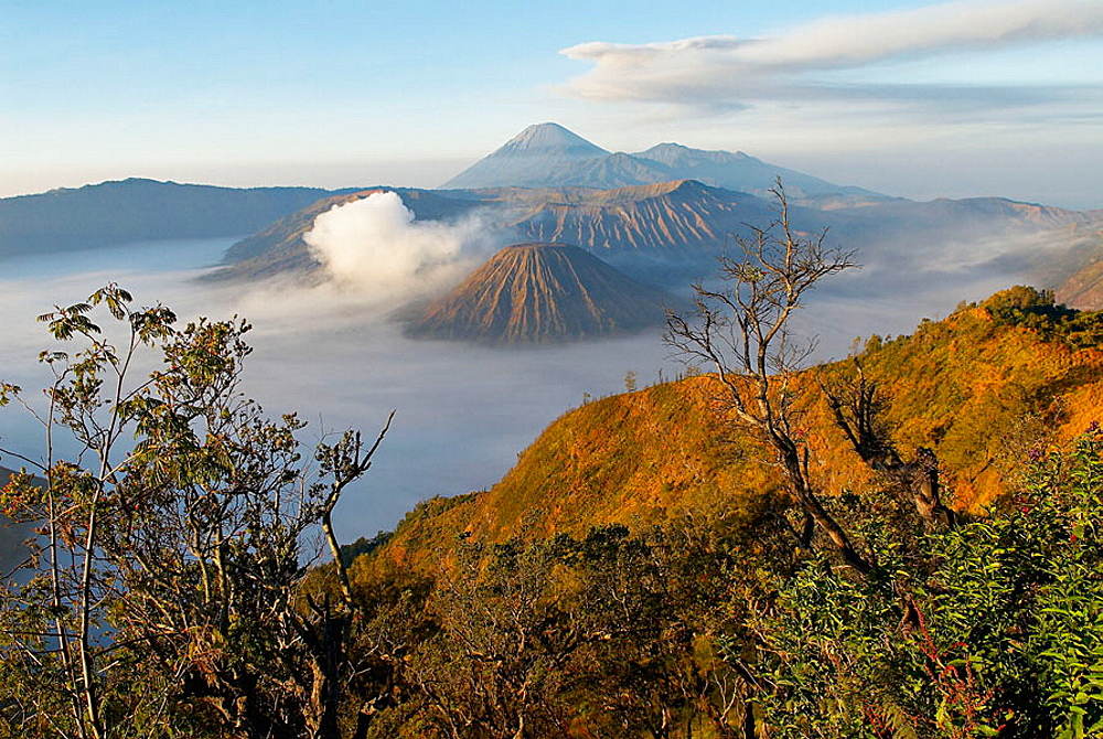 Bromo (2392m) and Semeru (3676m) volcanoes, early morning, Java island, Indonesia.