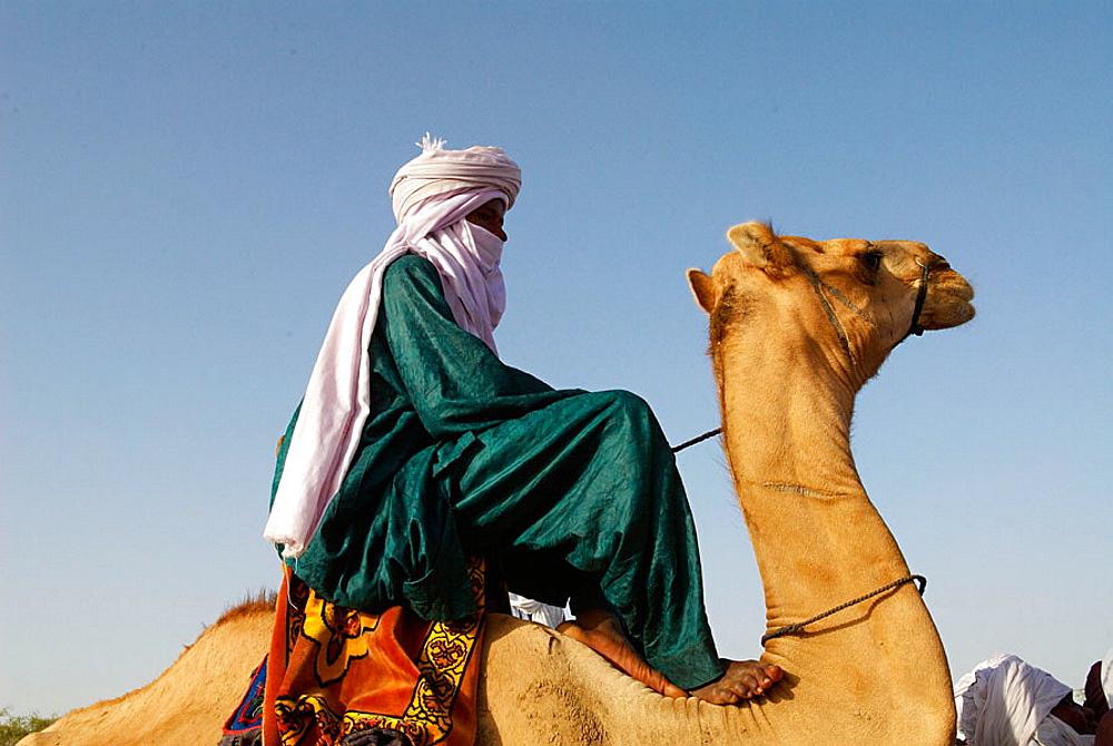 Camel race, Niger