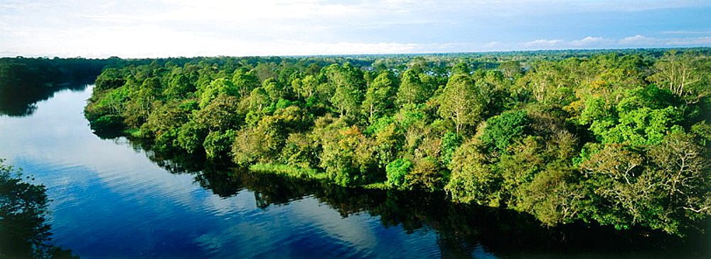 Ariau River and tropical forest, Amazon area, Brazil
