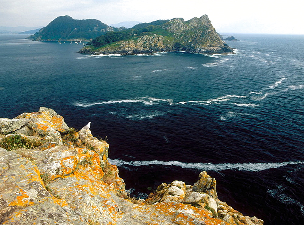 San Martino Island, Islas Atlanticas National Park, Islas Cies, Pontevedra province, Spain.