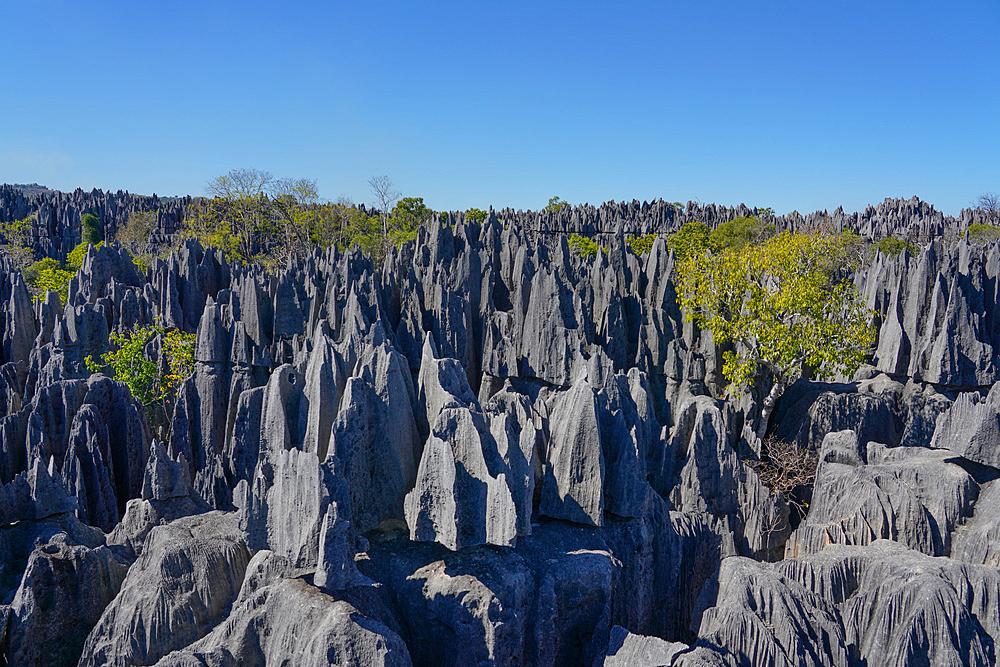 Tsingy de Bemaraha National Park, Melaky Region, Western Madagascar - 819-1013