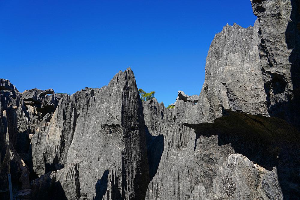 Small Tsingy, Tsingy de Bemaraha National Park, Melaky Region, Western Madagascar - 819-1018