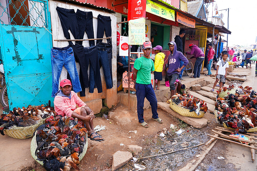 Chickens for sale at the weekly market at Behenjy, Antsirabe, Central Madagascar