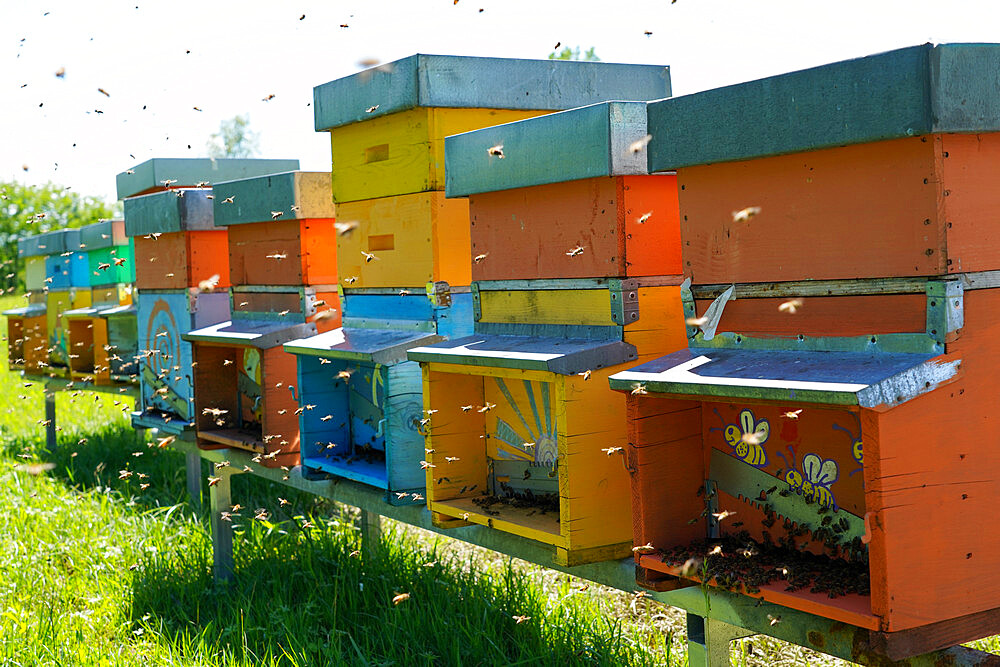 Carniolan honey bee hives in the Dolomites, Santa Giustina, Belluno, Italy, Europe