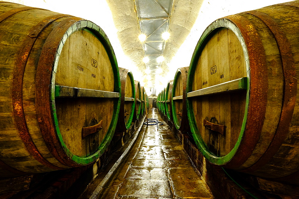Beer maturing oak lager casks in the historic Cellars of the Pilsner Urquell brewery, Pilsen (Plzen), Czech Republic, Europe