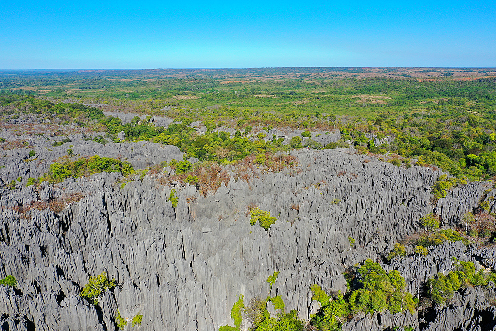 The karst limestone formation at Parc National des Tsingy de Bemaraha, UNESCO World Heritage Site, Tsiribihina region, Madagascar, Africa