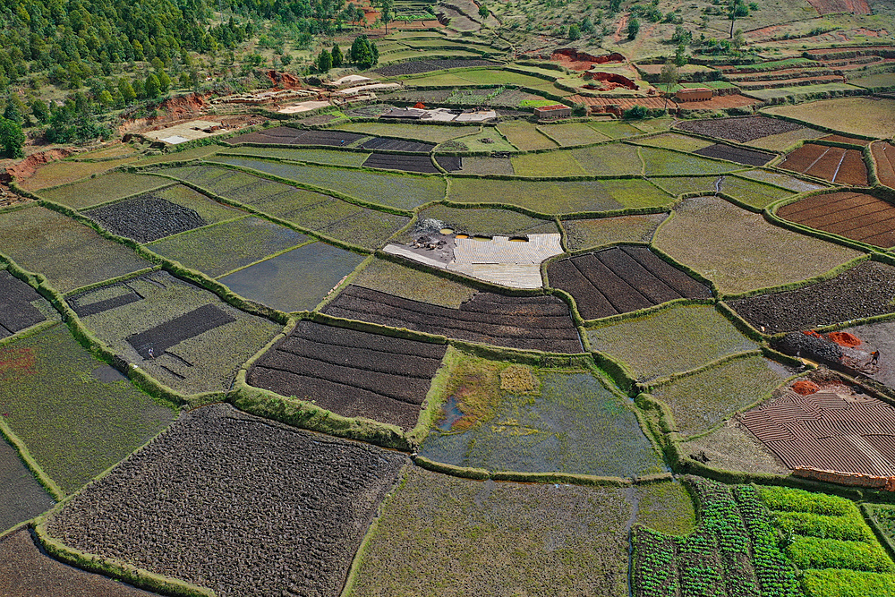 Vegetable cultivation and brick making on the rice fields, National Route RN7 between Antsirabe and Antananarivo, Madagascar