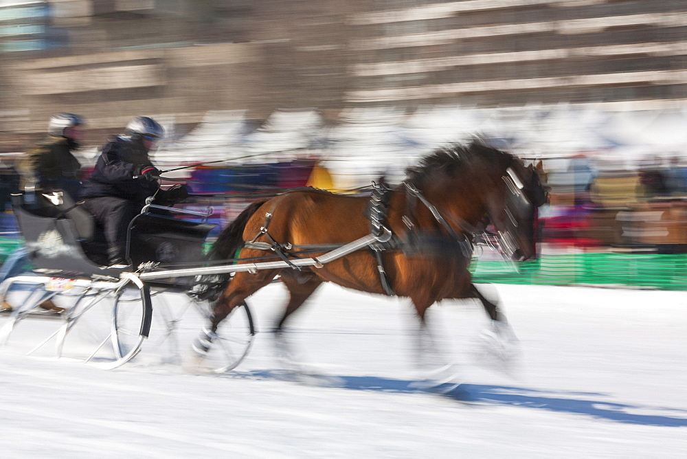 Sleigh race, Quebec Winter Carnival, Quebec City, Quebec, Canada, North America - 821-244
