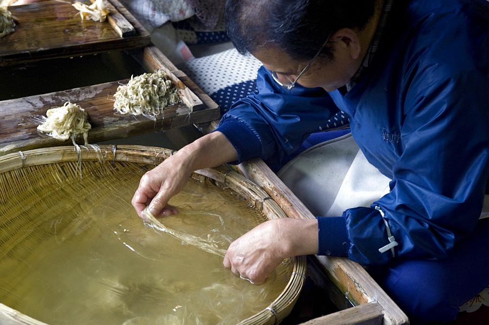 Separating mulberry fibers for making Japanese washi paper at the Echizen Washi No Sato village in Fukui, Japan, Asia
