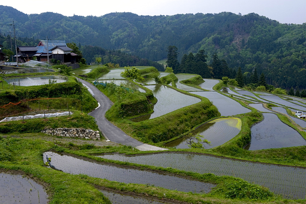 Flooded rice paddy terraces in early spring in mountain village of Hata, Takashima, Shiga, Japan, Asia - 822-252