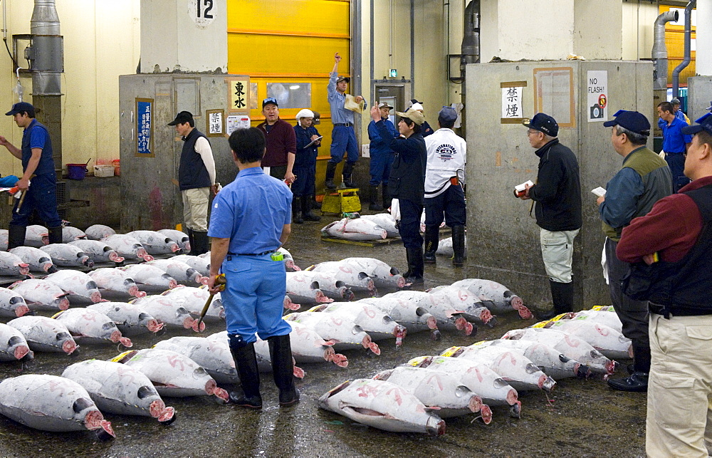 Tuna auction under way at Tsukiji Wholesale Fish Market, the world's largest fish market in Tokyo, Japan, Asia - 822-271