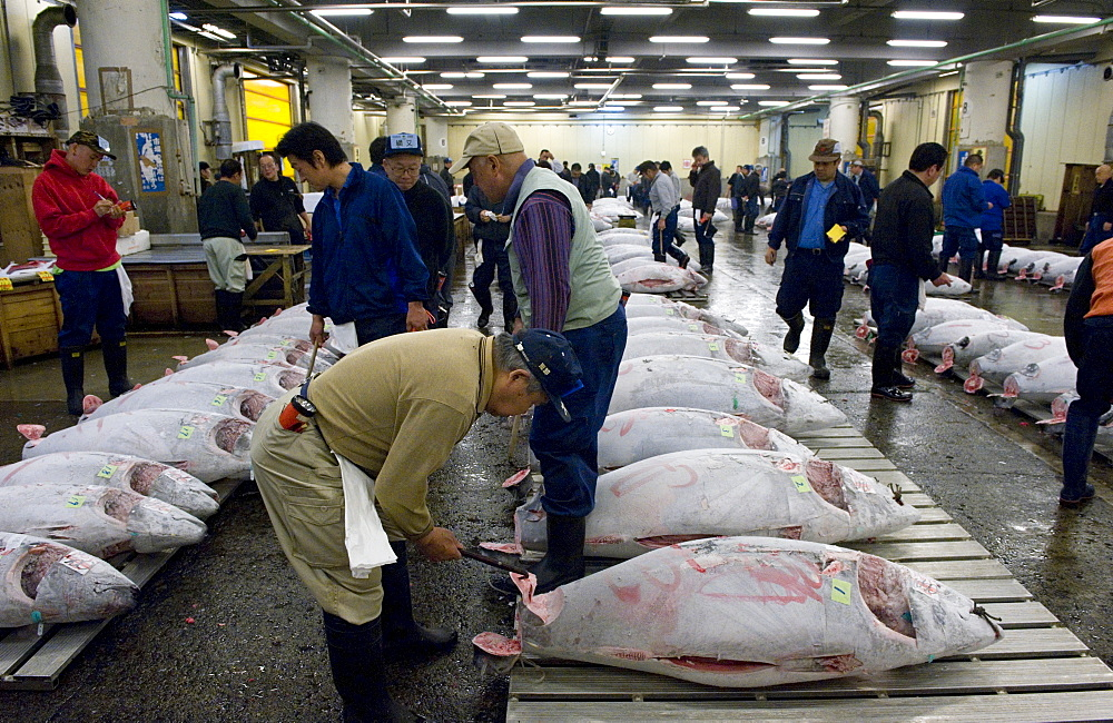 Buyer checking tuna quality at Tsukiji Wholesale Fish Market, the world's largest fish market in Tokyo, Japan, Asia - 822-272
