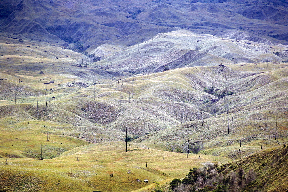 Aerial image of skeleton forest, damaged by forest fire, on La Gran Sabana, Canaima National Park, UNESCO World Heritage Site, Bolivar State, Venezuela, South America
