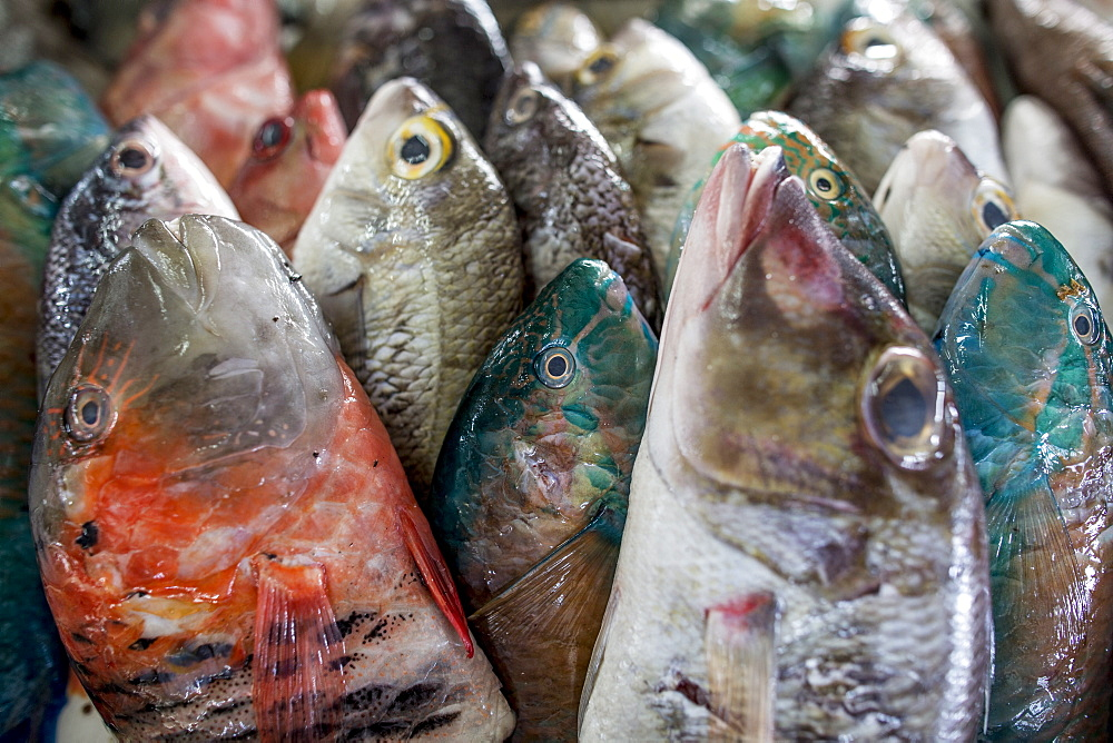 A collection of fish for sale in Kudat fish market, Sabah, Malaysian Borneo, Malaysia, Southeast Asia, Asia  - 824-157