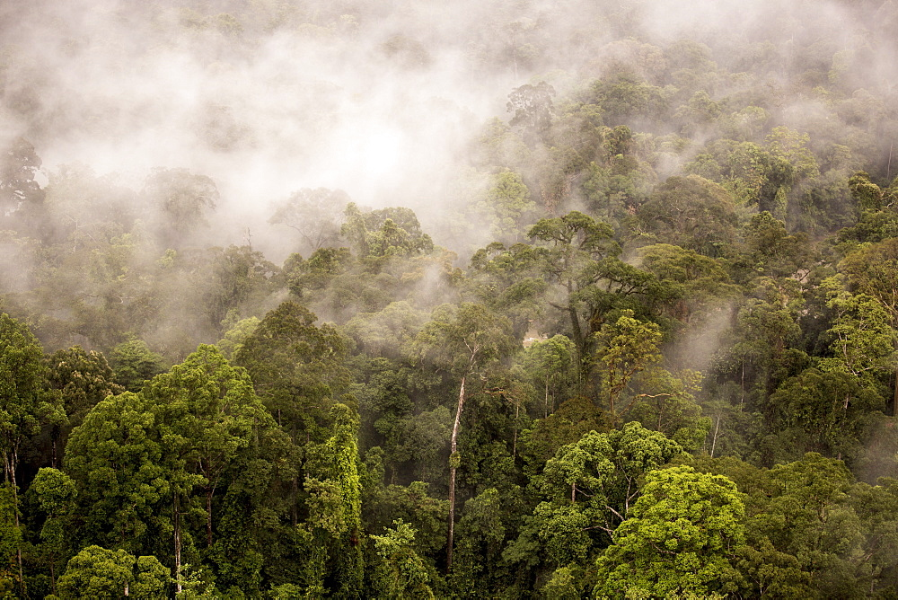 Rain mist rising from the forest canopy in Danum Valley, Sabah, Malaysian Borneo, Malaysia, Southeast Asia, Asia  - 824-161