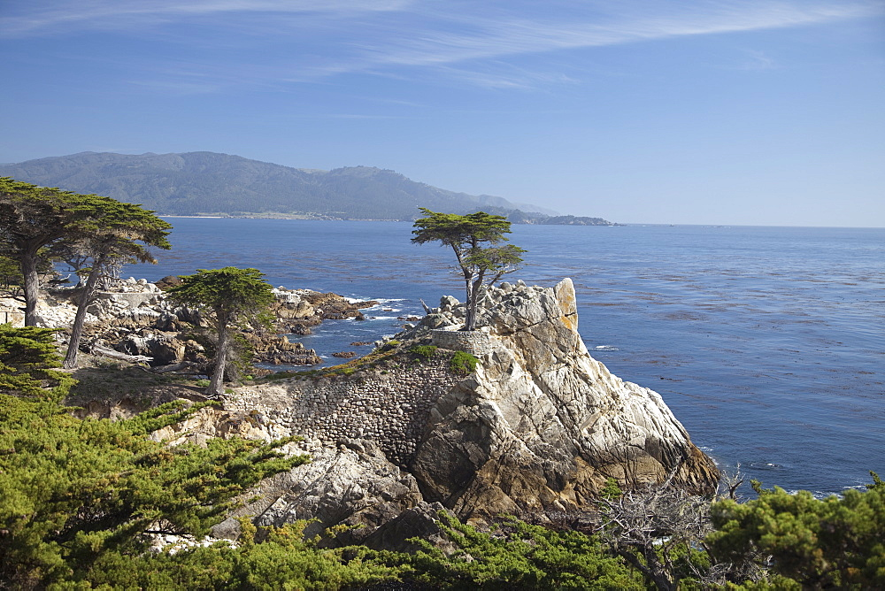 Lonely pine on 17 Mile Drive near Monterey, California, United States of America, North America - 825-237