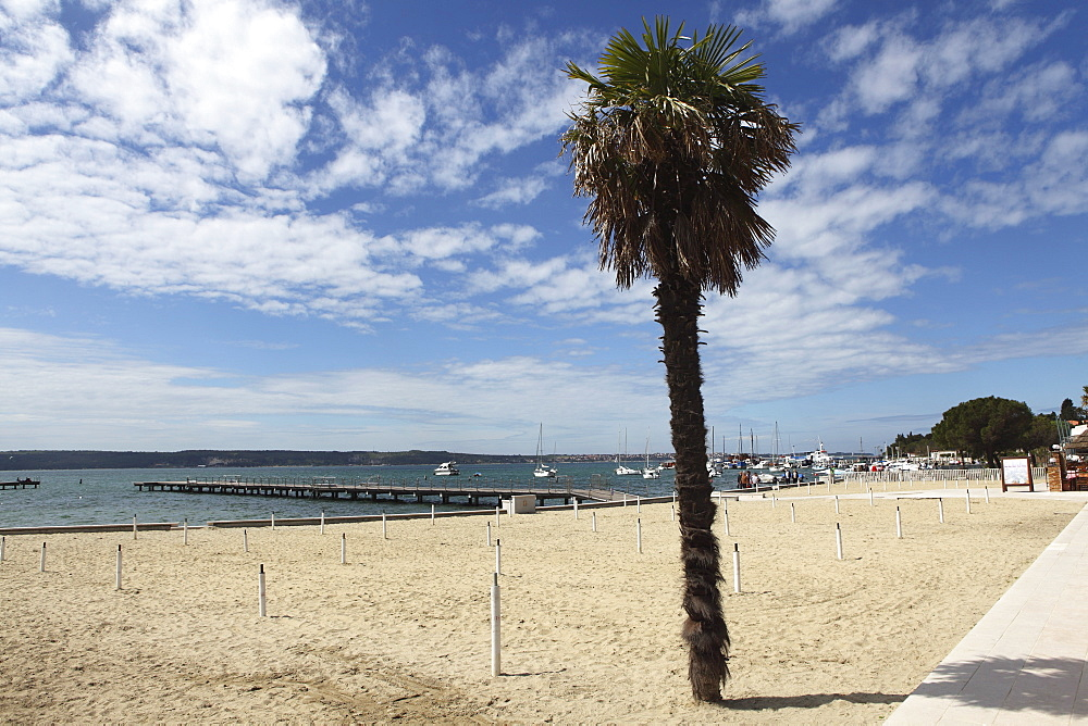 Palm tree on the beach of the Istrian bathing resort and popular holiday town of Portoroz, Piran, Slovenia, Europe - 826-574