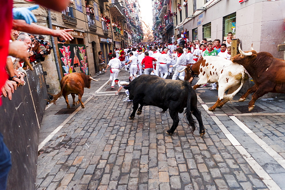Seventh Encierro (running of the bulls), San Fermin festival, Pamplona, Navarra (Navarre), Spain, Europe - 827-322