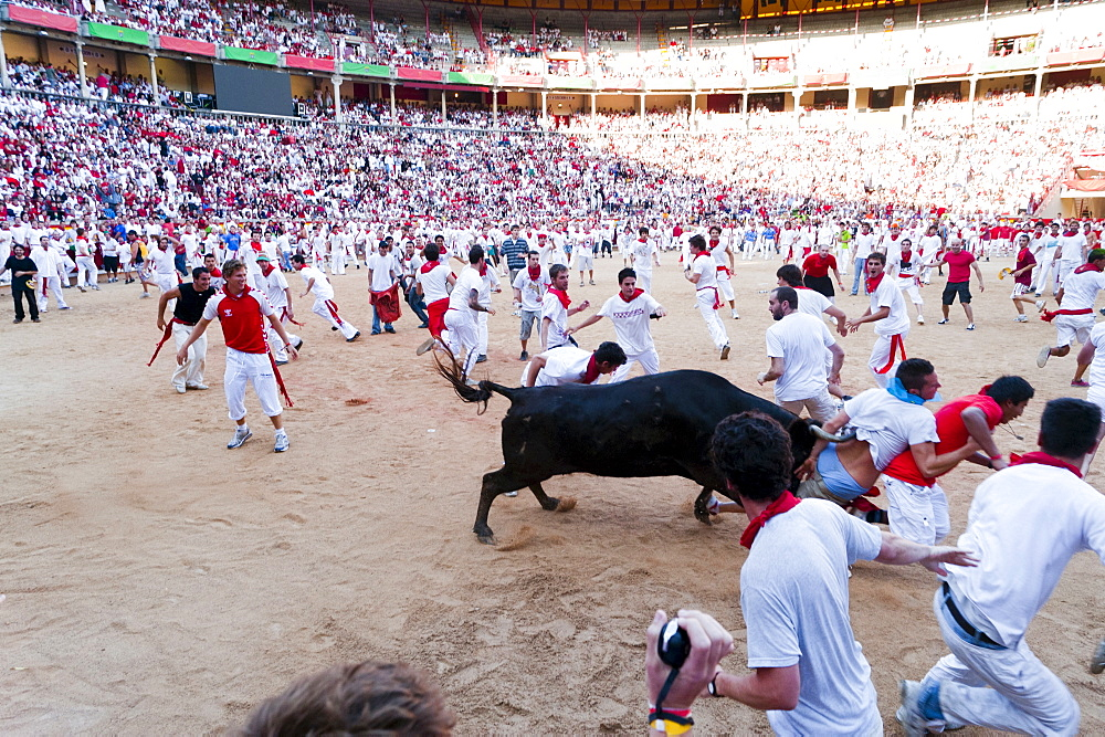 Amateur bullfight with young bulls, San Fermin festival, Pamplona, Navarra (Navarre), Spain, Europe - 827-325