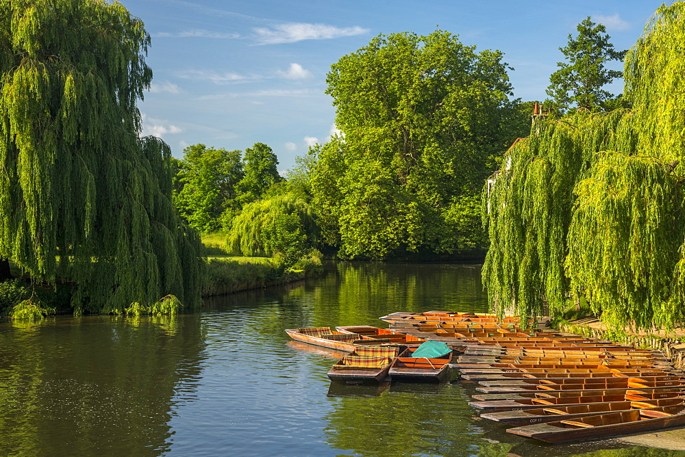 Punting on the River Cam and Mill Pond, Cambridge, Cambridgeshire, England, United Kingdom, Europe