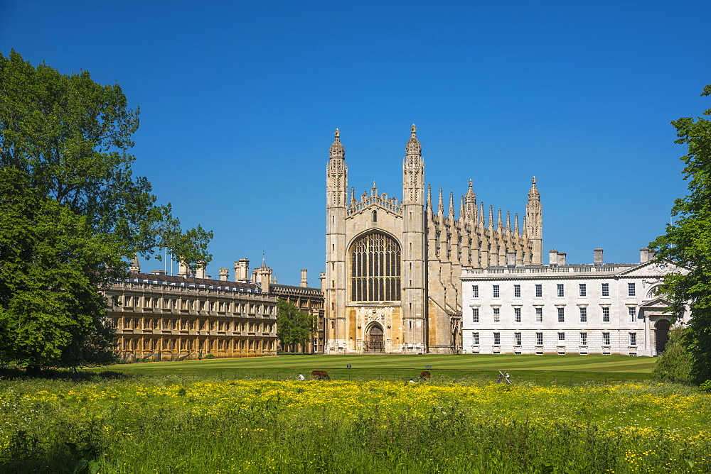 The Backs, King's College, King's College Chapel, Cambridge, Cambridgeshire, England, United Kingdom, Europe - 828-1164