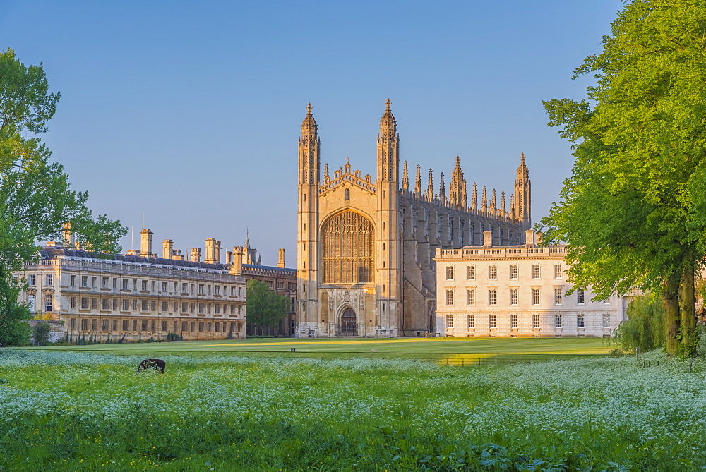 King's College, King's College Chapel, The Backs, Cambridge, Cambridgeshire, England, United Kingdom, Europe