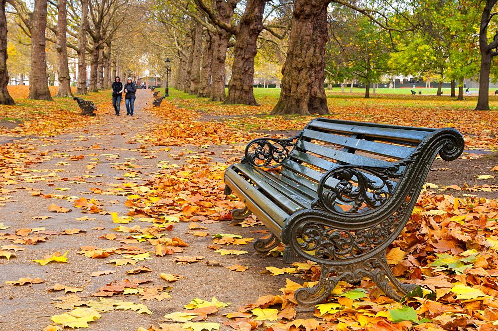 Green Park in autumn, London, England, United Kingdom, Europe - 828-327