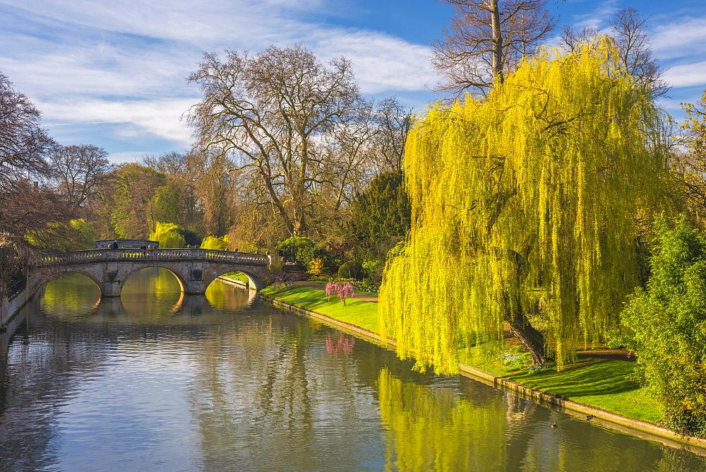 The Backs, River Cam, Cambridge, Cambridgeshire, England, United Kingdom, Europe