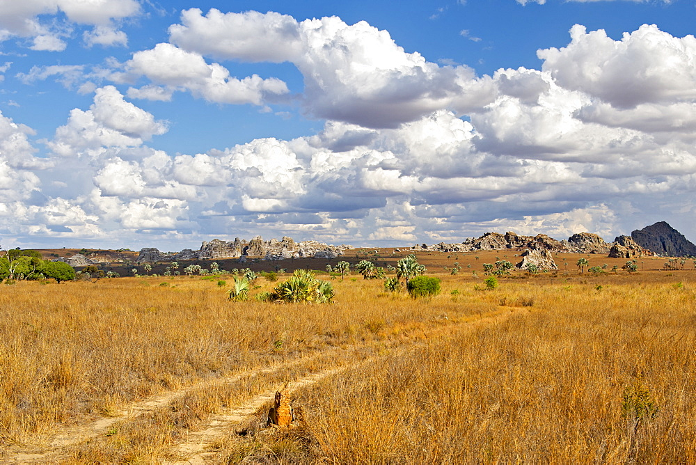 The plains of Isalo National Park, a region of the park on the Malaso circuit, southern Madagascar, Madagascar, Africa