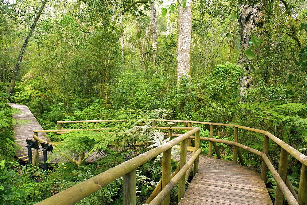High Quality Stock Photos Of Garden Of Eden