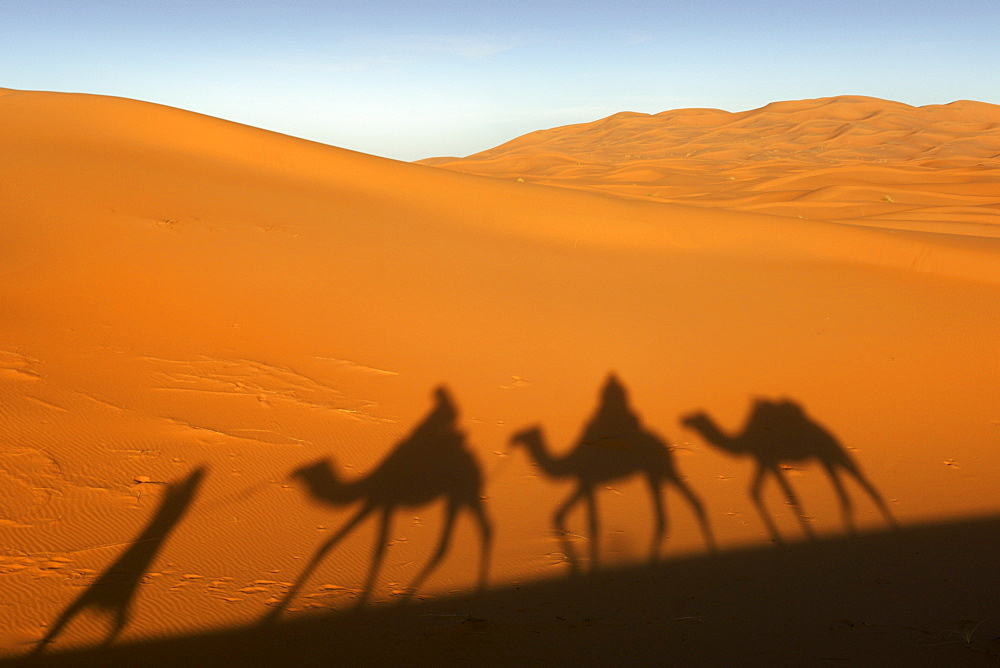 Shadow of a berber man leading three camels though the sand dunes of Erg Chebbi on the periphery of the Sahara desert near Merzouga in eastern Morocco