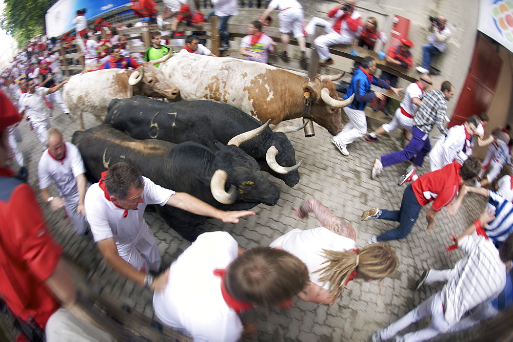 Crowds running with bulls during the encierro at the festival of San Fermin (The Running of the Bulls), Pamplona, Navarra, Euskadi, Spain, Europe - 829-1302