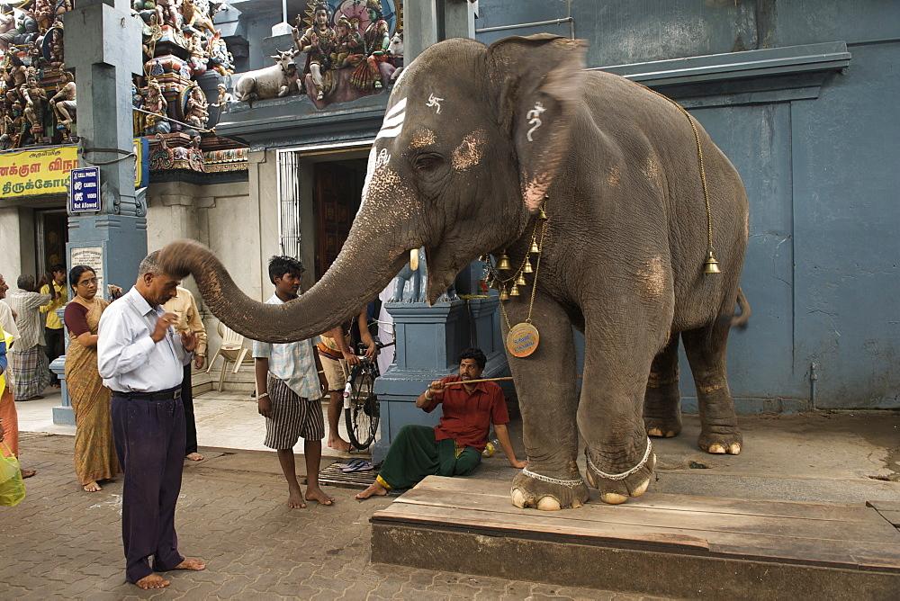 An elephant dispensing blessings at the Sri Manakkula Vinayagar temple in Pondicherry India