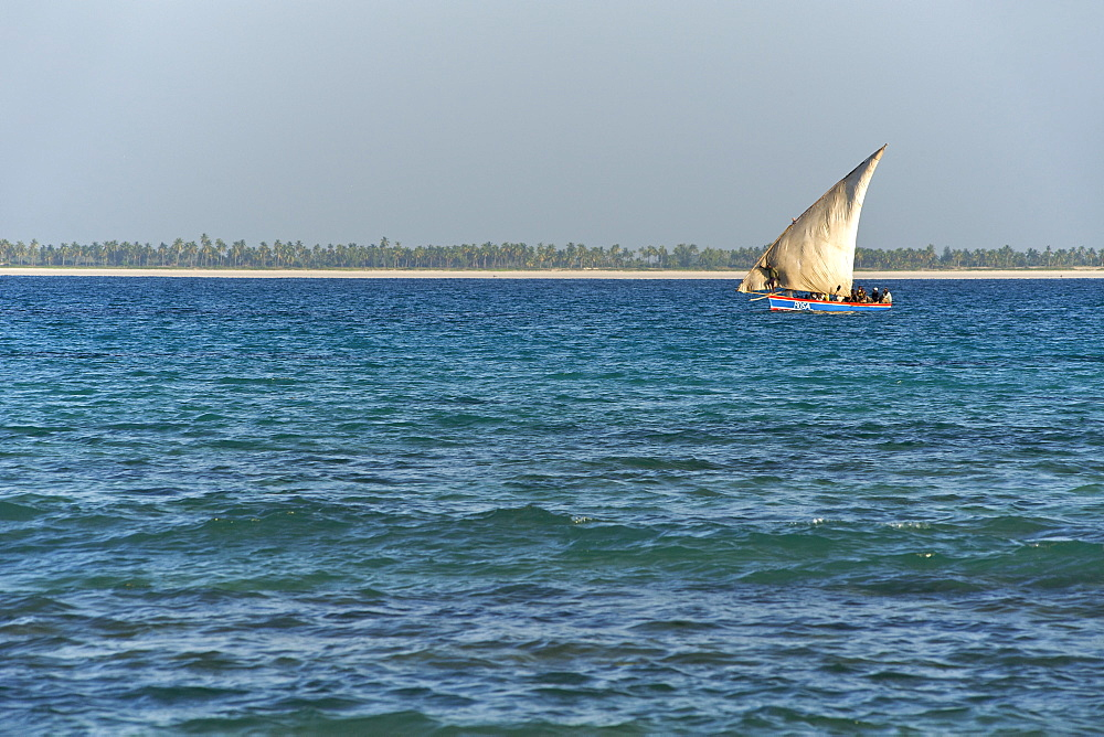 Dhow sailing in the Quirimbas archipelago off the coast of northern Mozambique, Indian Ocean, Africa