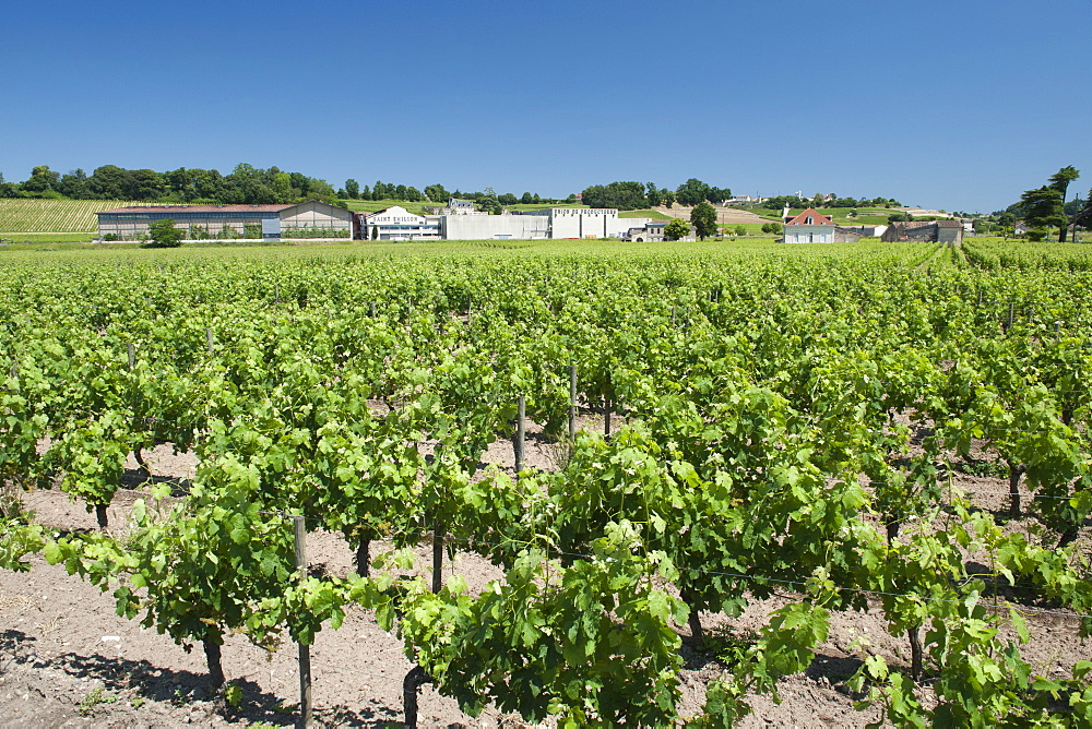 A winery and vineyards in the St.-Emilion region of the Gironde department in Aquitaine, southwestern France, Europe