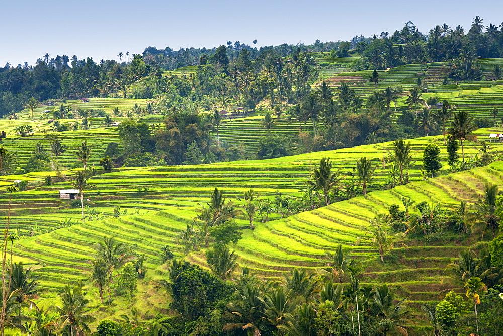 Jatiluwih rice terrace paddies in Bali, Indonesia. - 829-2125
