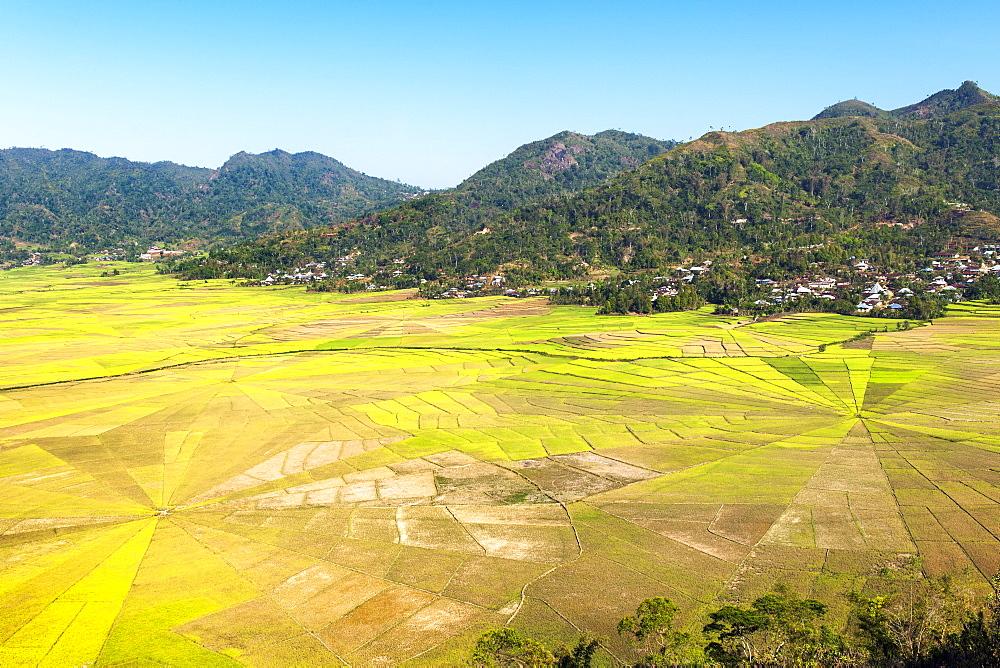 Sawah sarang laba-laba (spider web rice paddies) near Ruteng on Flores island, Indonesia. - 829-2147
