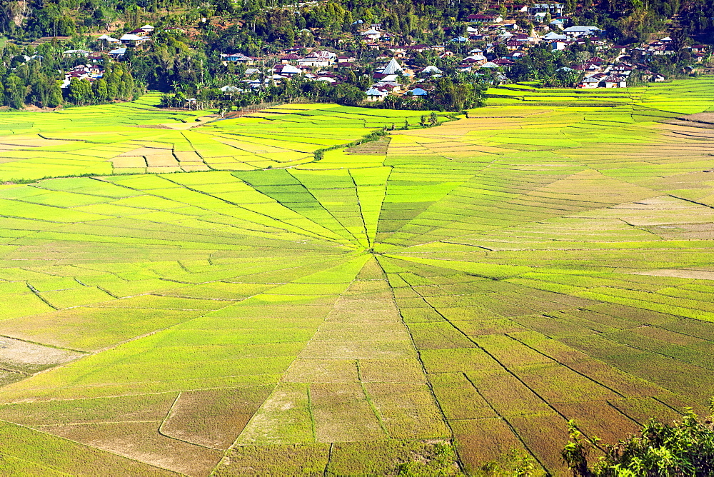 Sawah sarang laba-laba (spider web rice paddies) near Ruteng on Flores island, Indonesia.