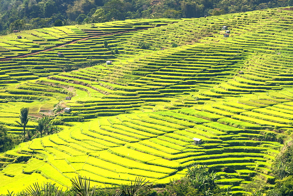 Golo Cador rice paddies near Ruteng, Flores island, Indonesia.