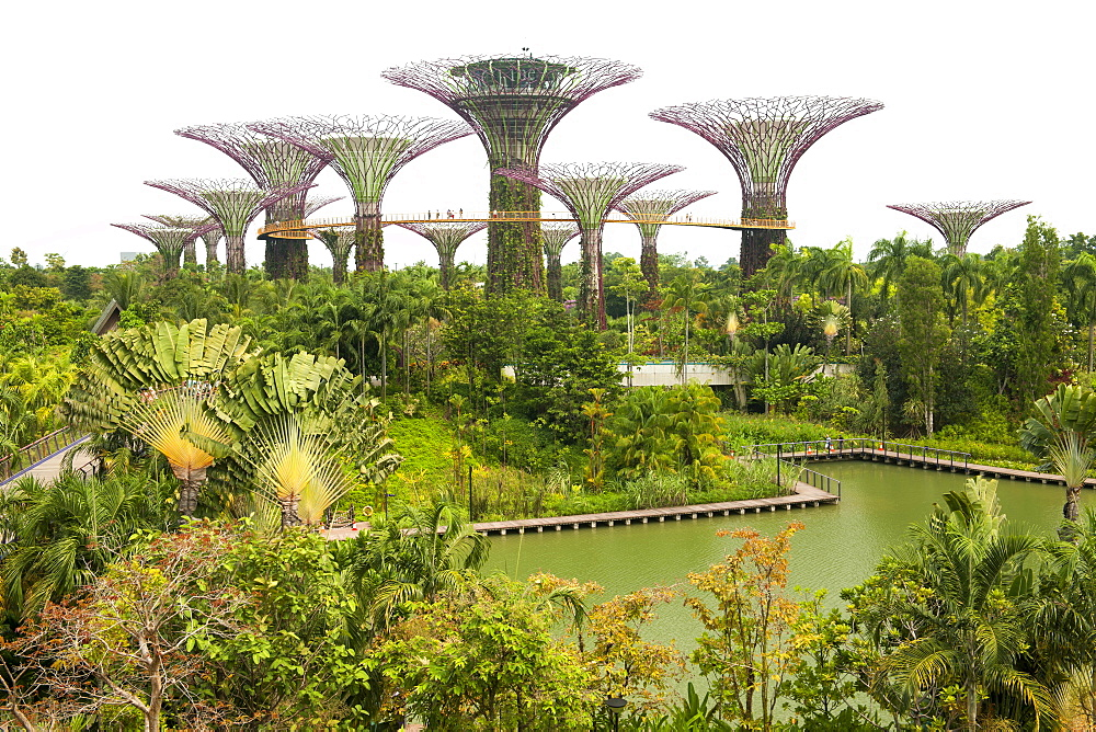 View of Supertree Grove in the Gardens by the Bay park in Singapore.