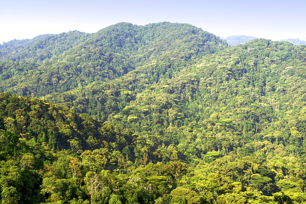 View across the forests in Bwindi Impenetrable National Park in southern Uganda.