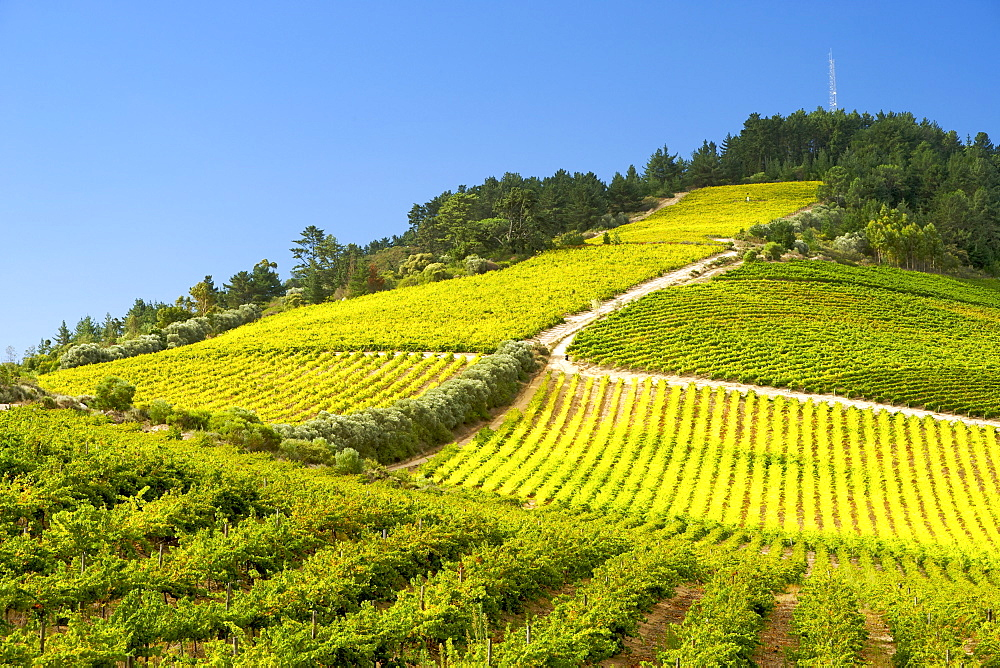 View across vineyards of the Stellenbosch district, Western Cape Province, South Africa. - 829-720