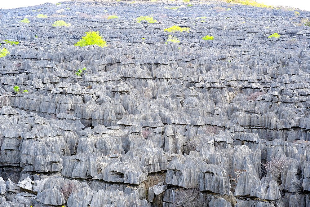 The Tsingy Rary landscape of limestone karsts in Ankarana National Park in northern Madagascar, Madagascar, Africa