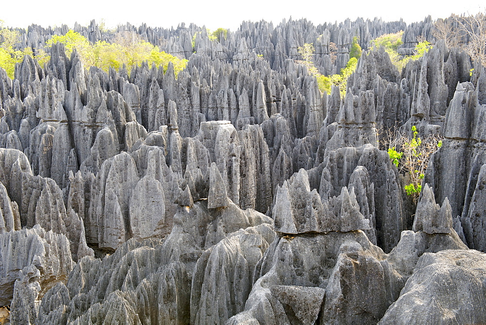View across the Grand Tsingy landscape of limestone karst in the Tsingy de Bemaraha National Park, UNESCO World Heritage Site, western Madagascar, Madagascar, Africa